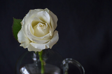 Single White Rose Bud in Glass Vase