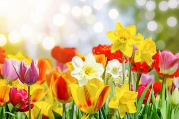 Bunte Blumen bringen den Frühling.