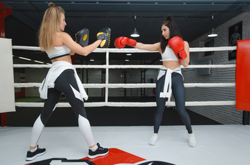 photos of girls in the Boxing ring