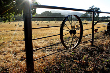 Morning light over a golden field behind a fence with a wagon wheel