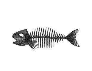 Fish skeleton. Isolated on white background. Vector illustration.