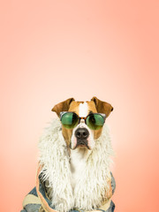 Funny staffordshire terrier dog in sunglasses and hippy coat. Studio photo of pitbull terrier puppy in bright color summer eyeglasses posing in front of pink background
