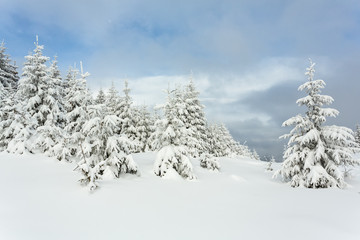 Beautiful Snow-covered Carpathians