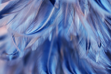 Bird and chickens feather texture for background Abstract,blur style and soft color of art design.
