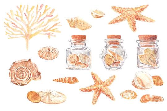 Watercolor illustration of seashells and starfish with seaweed