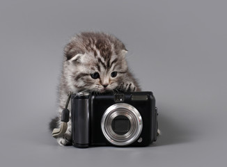 Small scottish fold kitten with camera