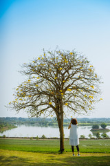 Asian woman Shooting photo a Branch Tree with yellow flowers at  a lake farm background