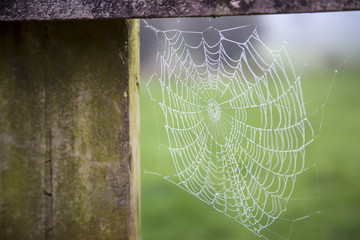Morning dew collects on a spider's cobweb in the New Zealand countryside of the North Island near Wairere Falls.