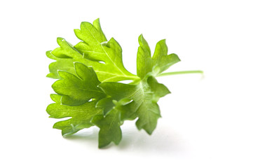closeup of parsley leaf on white background