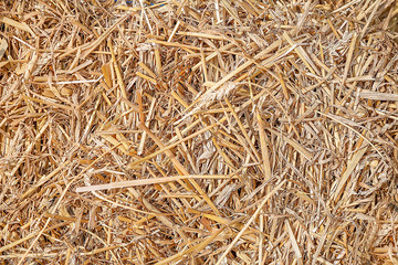Texture of hay, straw