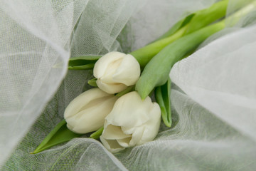 Delicate bouquet of white live tulips on white tulip and grass