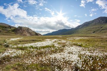 Tundra Landschaftsfotos vom Sommer in Grönland / Kalaallit Nunaat /Sisimiut