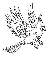 Flying bird cardinal, black and white vector illustration on white background.