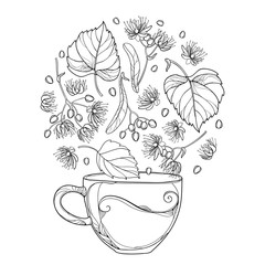 Vector outline cup of Linden or Tilia or Basswood herbal tea in black isolated on white background. Contour Linden flower bunch, bract, fruit and ornate leaves for summer design and coloring book.