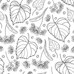 Vector seamless pattern with outline Linden or Tilia or Basswood flower bunch, bract, fruit and ornate leaf in black on the white background. Contour Linden for summer design or coloring book.