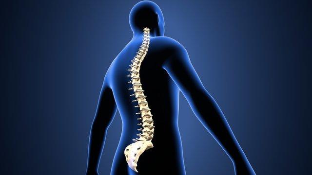 3d illustration of human body  spinal bone anatomy