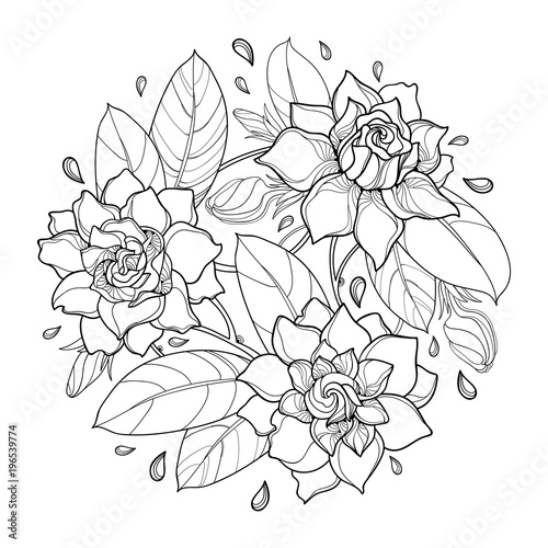 Vector Round Bouquet With Outline Gardenia Flower Bud And Ornate