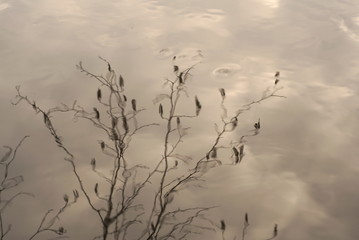tree branches reflected in the water pond