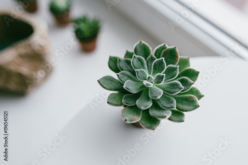 Home Indoor Plants Aloe Cactus Succulent Plant Small Plants On The