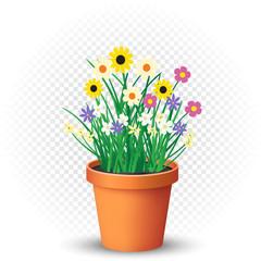 flowers grows in flowerpot on transparent