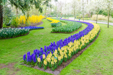 Keukenhof garden, Netherlands -April 05: Colorful flowers and blossom in dutch spring garden Keukenhof which is the world's largest flower garden. Keukenhof Garden, Lisse, Netherlands - April 05, 2017