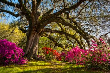 Spring Flowers Bloom at Charleston South Carolina Plantation