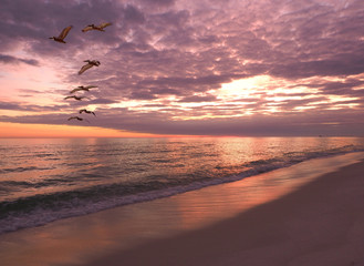 Wall Mural - Flock of Pelicans Fly Over The Shoreline at Sunset