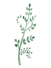 Hand drawn green leaf. Watercolor isolated object.