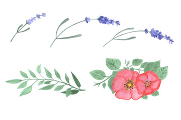 Hand drawn watercolor leaves, lavender and flower set.Watercolor isolated object.