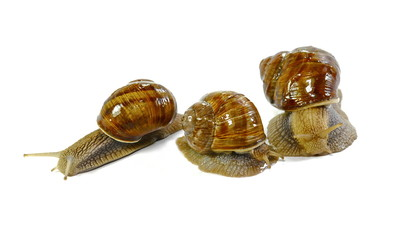 snails isolated on white background