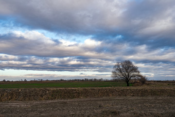Lonely bare tree in farm field against cloudy sky