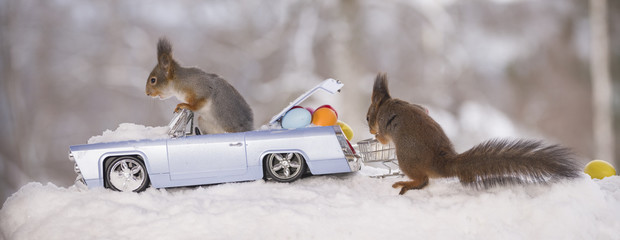 red squirrels in snow with a car and eggs