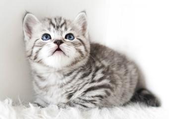 cute kitten is sitting.