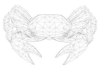 Polygonal crab in front