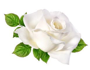 white rose isolated on white
