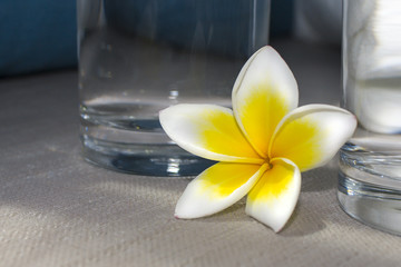 Frangipani flower close-up. The concept of SPA. Copy space 1