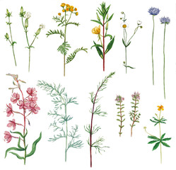 Watercolor set of meadow plants
