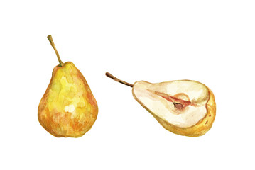 Watercolor pear hand drawn illustration
