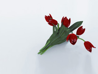 tulips on the white background,  3d