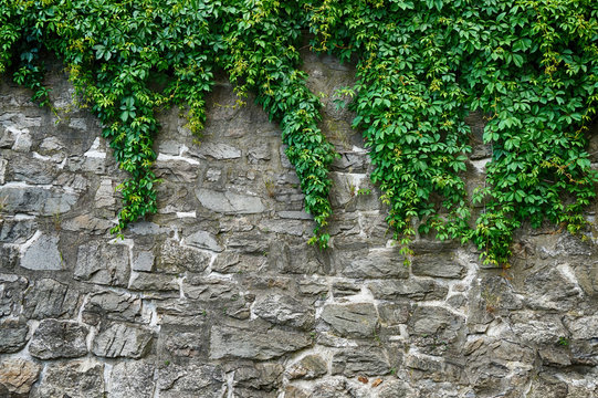 green leaves and stone wall