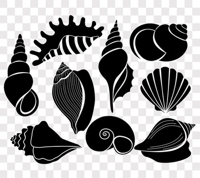 Vector illustration set of beautiful sea shells black silhouettes isolated on transparent background.