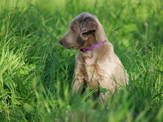small puppy sitting in the grass