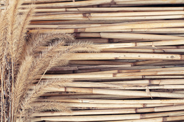 Dry  plants on reed background