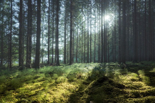 Clearing in a forest with sunshine  through the branches