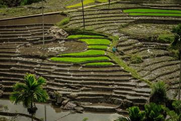 Reisterrassen im Hochland von Sri Lanka