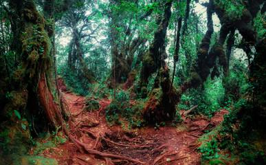 Mysterious vegetation of tropical rainforest