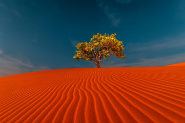 Poster Cuban Red Stunning view of rippled sand dunes and lonely tree growing under amazing blue sky at drought desert landscape. Global warming concept. Nature background