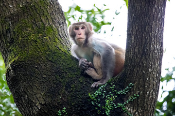 Macaque monkey perching on tree