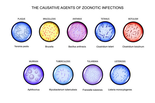 the causative agents of zoonotic infections