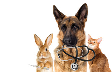 dog veterinarian and cat in the clinic